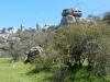 andaluzija-el-torcal_zelva-ki-se-plazi-med-grmovjem