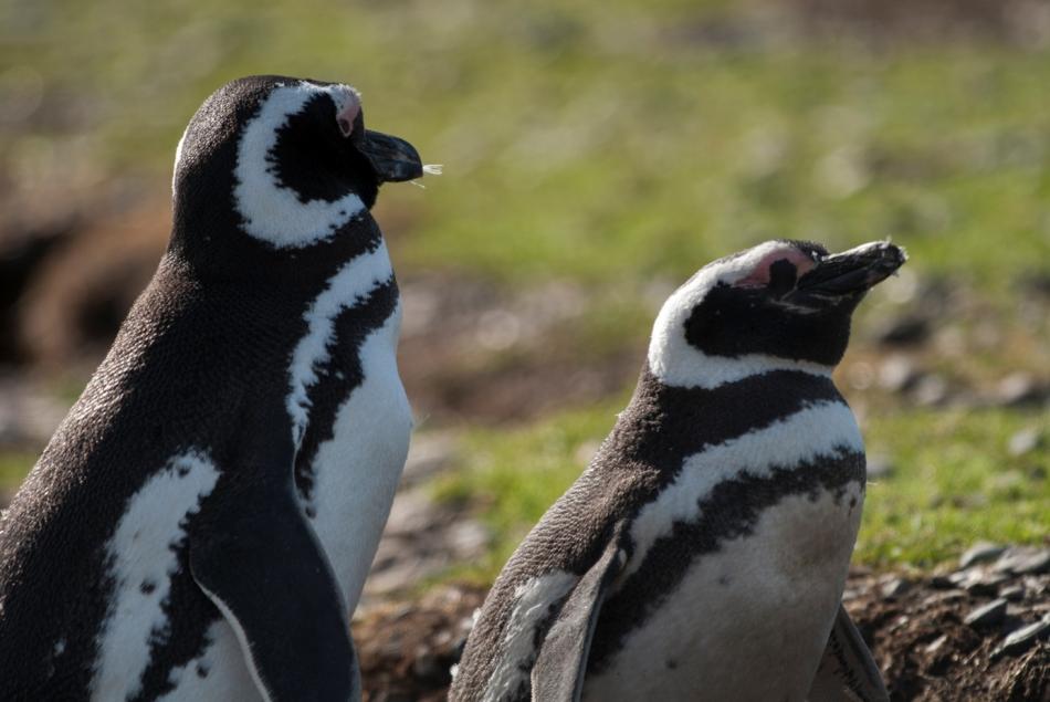 8-Ko en pingvin vidi, da se drugi sonči in smeji