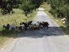 albanija-gneca-na-cesti