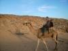 14-Zakaj le je fantič sedel h Jožiju na kamelo? Aja, denarnico mu je zmaknil !