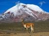 Ekvador-Chimborazo
