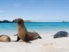 Galapagos-morski levi