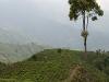 cajne-plantaze-v-okolici-darjelinga