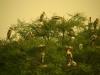 17-indija_2012-10_154