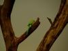 18-indija_2012-10_163