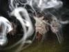 Plemenski ples iz pokrajine Taraj Nepal