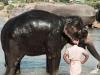 Kopanje slonov