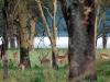 kenija-tanzanija-antilope