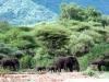 kenija-tanzanija-divjina