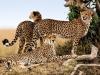 kenija-tanzanija-leopard