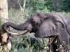 kenija-tanzanija-slon
