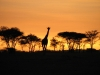 kenija-tanzanija