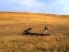Malo drugačni kirgiški pastir