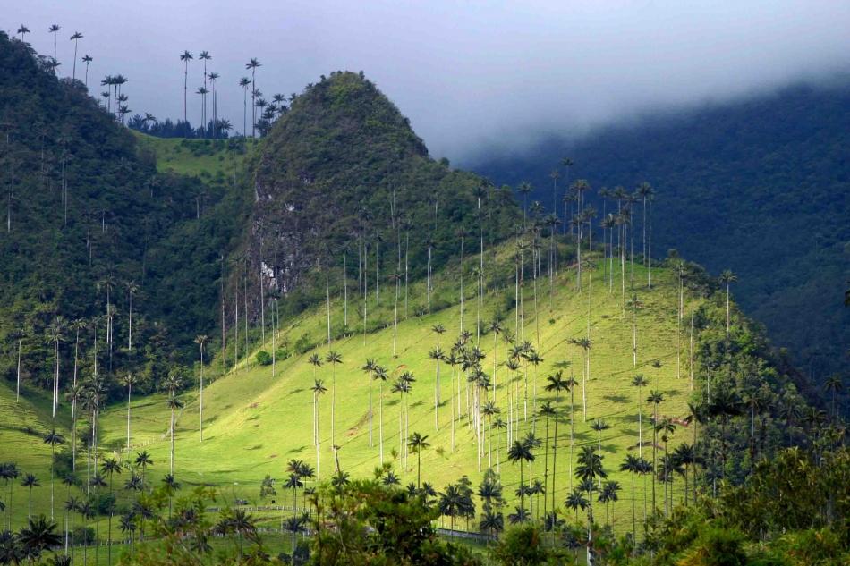 Kolumbija-Cocora