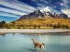 Argentina-Torres del Paine-gvanako prečka reko