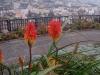 Madeira-Barcelos viewpoint-Pogled na mesto Funchal s priljubljene razgledne točke