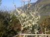 Madeira-Rabacal, lišaj starčeva brada, znak za čist zrak