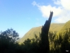 Madeira-Rabacal-Staro deblo ruševja v pragozdu