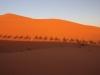 Naša puščavska karavana v Erg Chebiju ob sončnem zahodu.