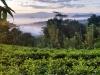 Šrilanka-začetek vzpona Allagala
