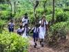 Šrilanka-vaška idila