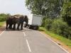 Šrilanka-cestna idila