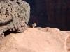 Zion, domorodne veveričke