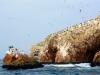 Bolj,ko se ladjice bližajo otokom bolj opazna je značilna rdeča barva in belkasto guano-ptičji iztrebki.