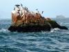 Približevanje otokom Ballestas, ki jim radi rečejo tudi perujski Gallapagos. To je skupina skalnatih otočkov sredi morja v bližini obalnega mesta Paracas.