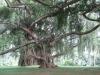 PERADENIYA - Botanični vrtovi so bili ustanovljeni z namenom preizkušanja tujih kultur, preden so jih začeli vpeljevati v kmetijstvo.