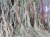 GALLE - Bo Božja modrost pognala korenine v človeških skupnostih ..