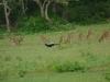 Živalski svet Šrilanke je res pester ...
