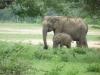 Sloni so skorajda zaščitni znak Šrilanke.