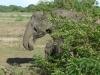 Veliko slonov živi v naravnem parku Yala, na JV otoka.