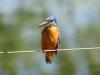 Na Šrilanki živi okoli 450 različnih vrst ptic. (foto Andrej Zajec)