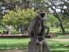 Seveda ne gre brez opic.