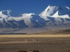 01-tiba-tibetanska-planota