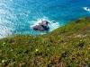 12-Portugalska-Cabo da Roca-hotentotska figa in Atlantik