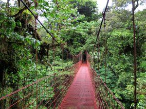 Kostarika -Monteverde - NARAVA