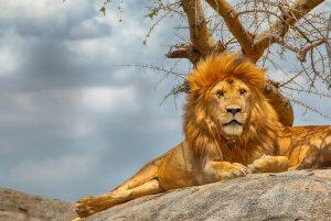 Tanzanija – Kdo je car