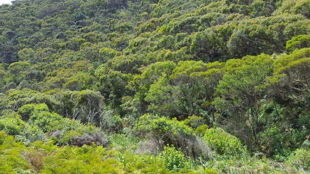 6. Pogled na park Otway, ki se nahaja vzdolž Velike obalne ceste