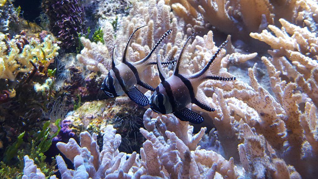 10. Detalj iz akvarija, kjer z lahkoto preživiš celo popoldne