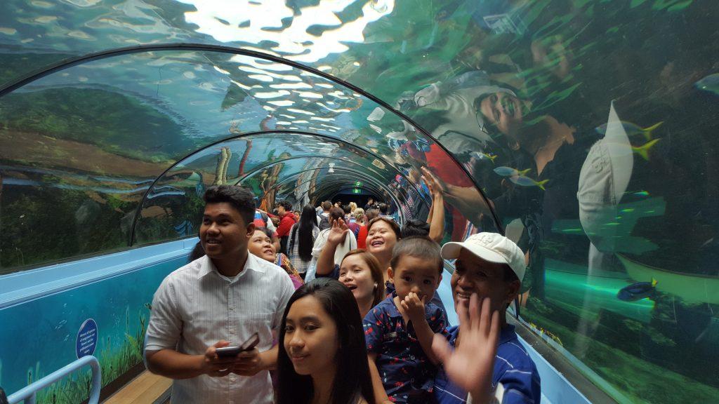 9. Akvarij je eden največjih in najlepših na svetu