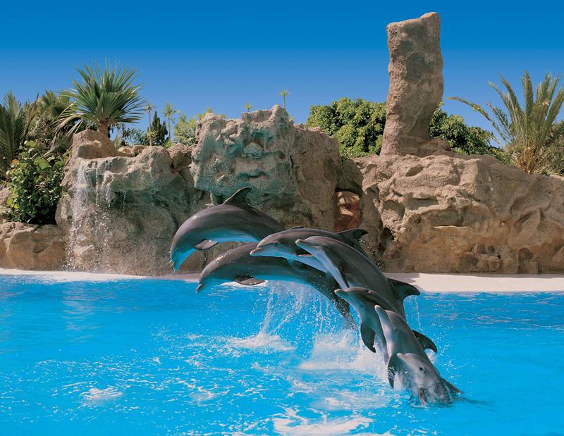 Loro park - poskočni delfini
