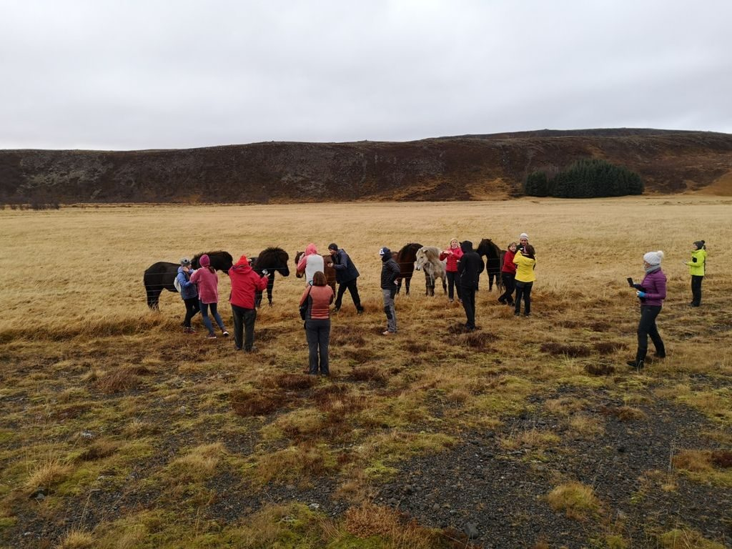 Islandski konji so zaščitni znak te odmaknjene dežele.