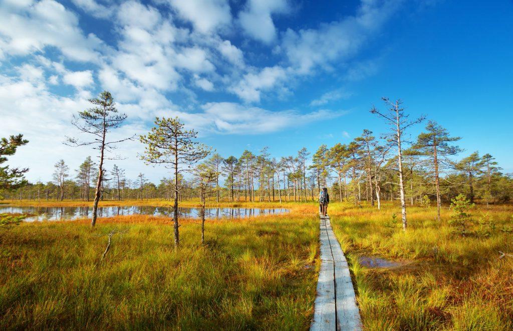 Estonija-NP Lahemaa-pot cez močvirje