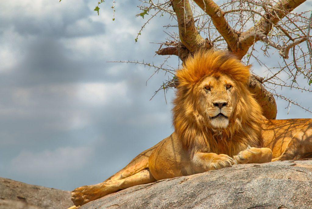 Oskarjeva Afrika