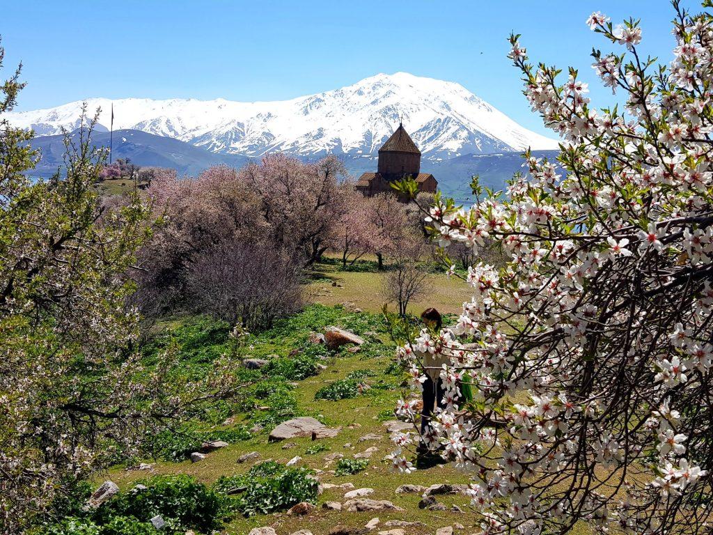 18-vzhodna Turčija-Akdamar-cvetoči raj mandljev na jezeru Van
