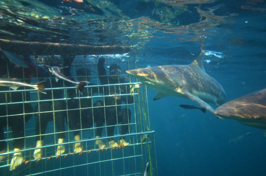Afrika JAR potop z morskimi psi 1307847796 1024x678 - Vtisi potnikov z oktobrskih potovanj - 2. del
