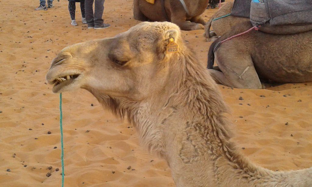 Maroko 2 1024x614 - Vtisi potnikov (januar, februar)